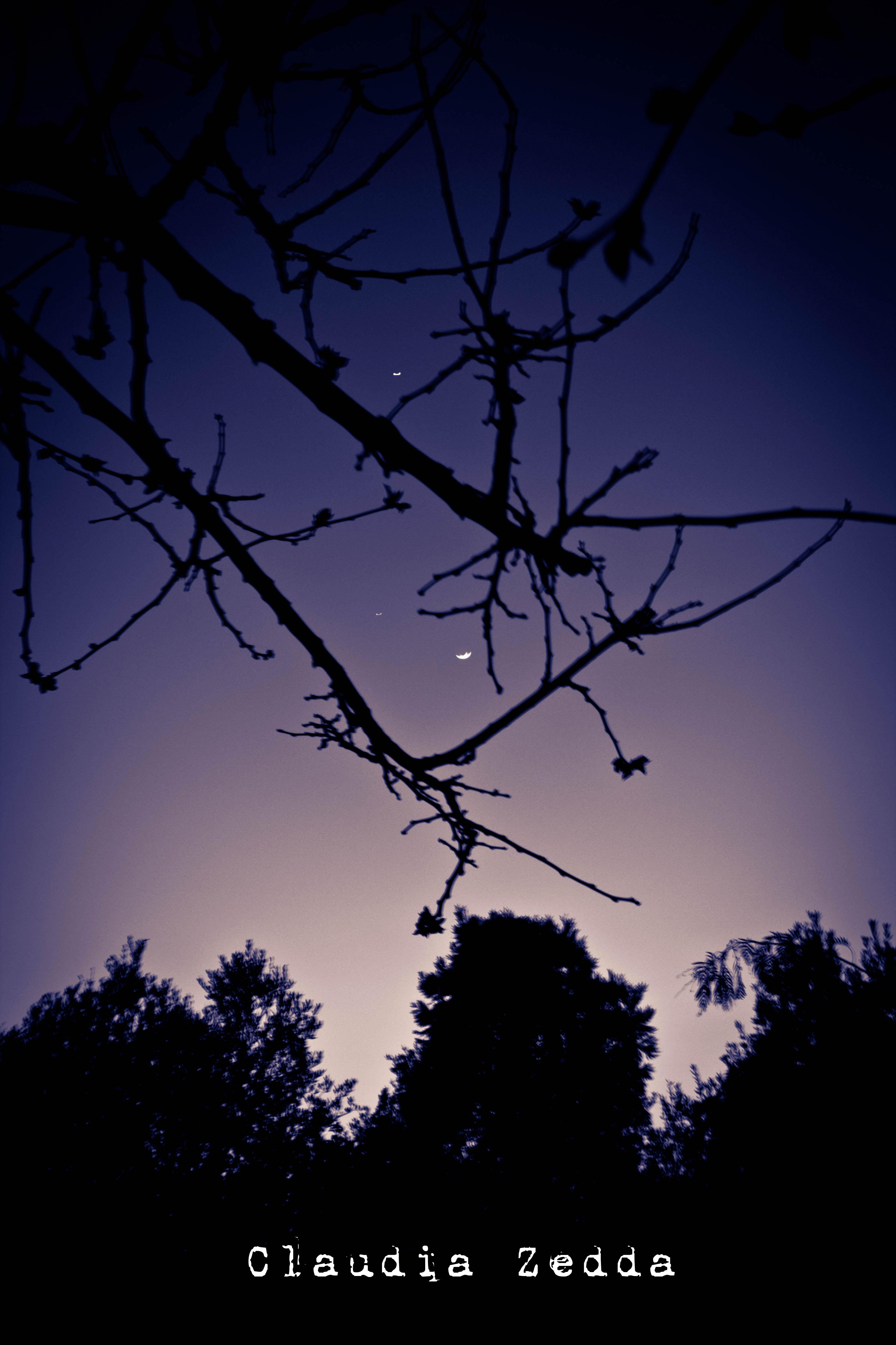 Luna di Sardegna