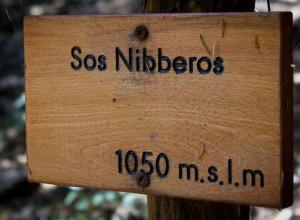 Sos-Nibberos-16